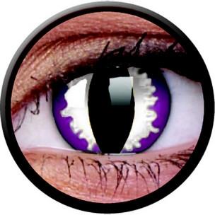 Purple Dragon (Annuelles) (2 lentilles)